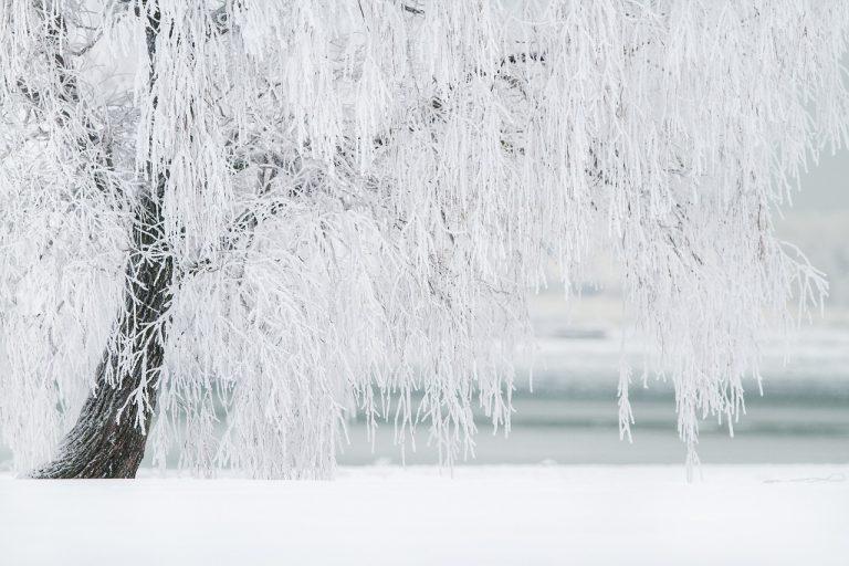 ice-tree-arborist-consultant